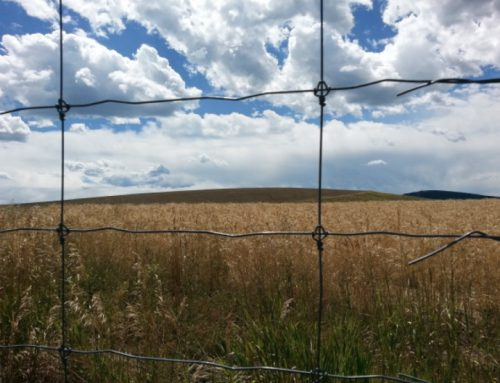 Routt County Conservation District Board Reborn!